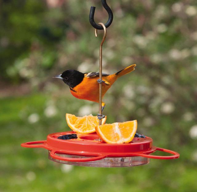 Feeding Orioles - Iron Oak Farm Blog - GRIT Magazine