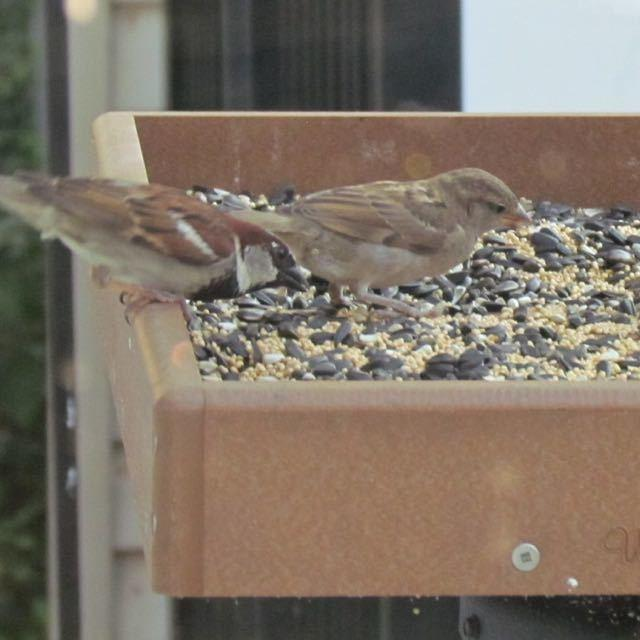 tray with sparrows
