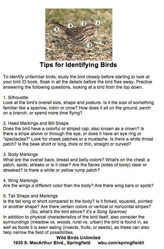 Tips for Identifying Birds