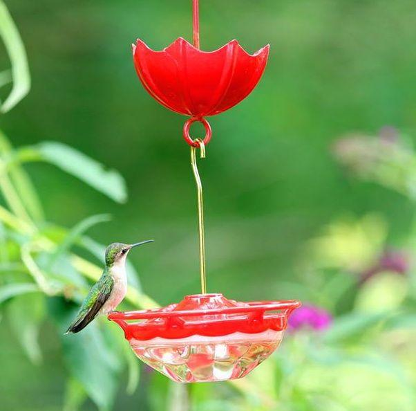hummingbird feeder mini high perch