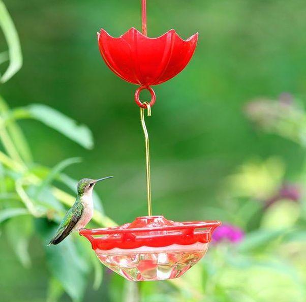 Exceptional Hummingbird Feeder Mini High Perch